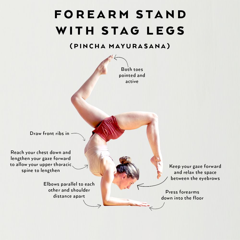 Perfect the Pose: Forearm with Stag Legs  Forearm stand, Yoga
