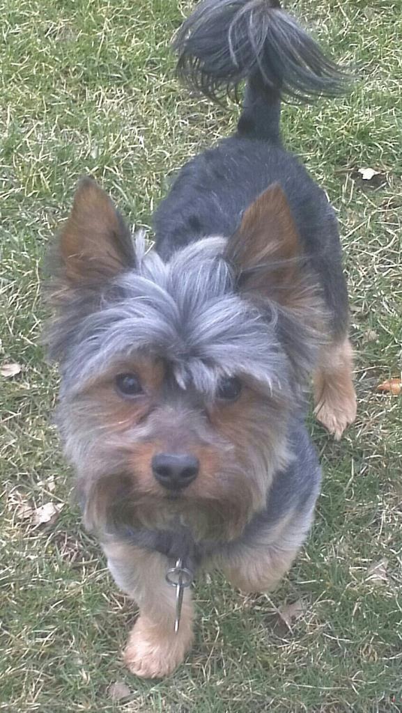 Craigslist Springfield Mo Lost Pets