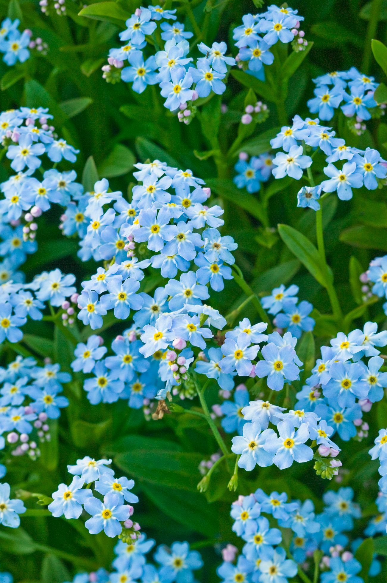 Outdoor flowers that like sun - 50 Flowers You Should Have In Your Garden
