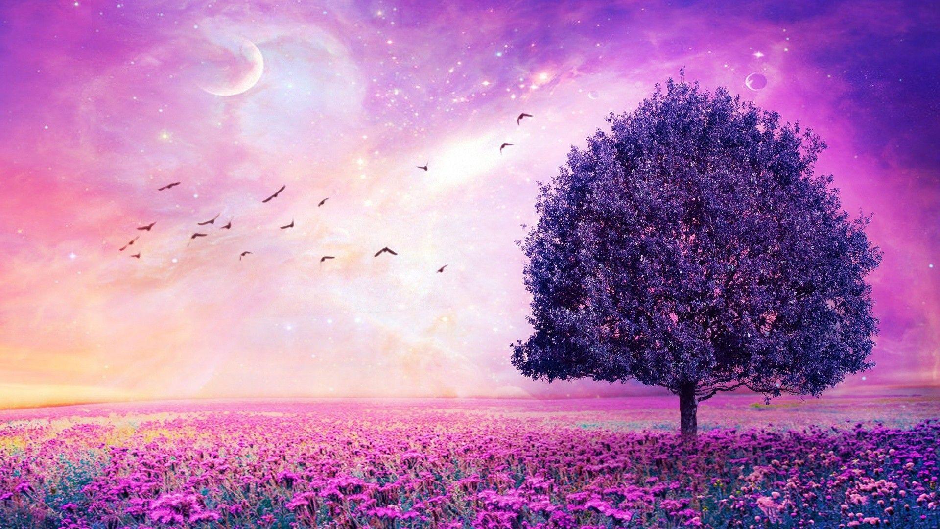 1920x1080 Purple Flower Wallpaper Free Download For Desktop Desktop Wallpapers High Definition Purple Flowers Wallpaper Abstract Art Wallpaper Field Wallpaper