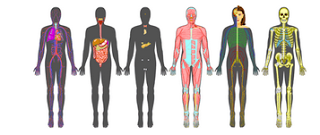 11 Free Tools To Teach Human Anatomy in 3D | Classroom: Life Science ...