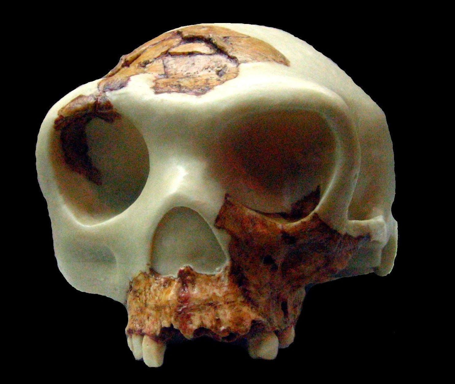 Pin on Human Evolution