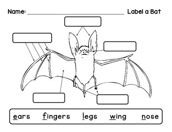 label a bat science ideas words, teacher newsletter Parts of a Rabbit Diagram