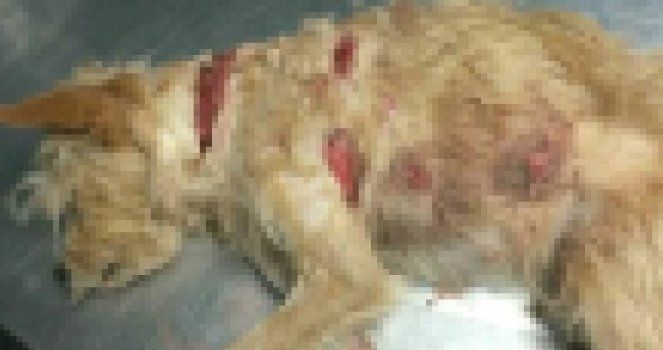Petition: Stop the man who attacked a dog with a machete, leaving him in serious condition