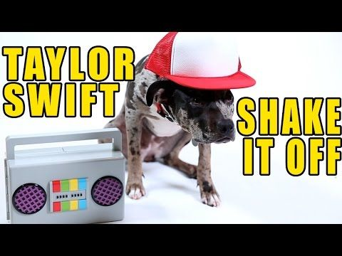 Taylor Swift Shake It Off Cute Dog Version Youtube Dogs Can