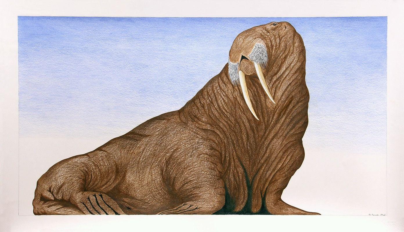 Untitled (Walrus) by Tim Pitsiulak Artist from Cape Dorset