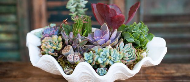living succulent arrangements from Simply Succulent.  so classy!