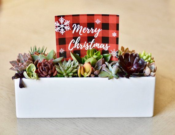 Christmas Succulent Gift.Christmas Succulent Gift Box Office Succulents For Friend