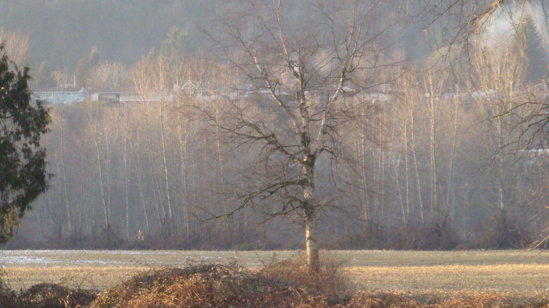 2009  fog in tree's in Mission BC