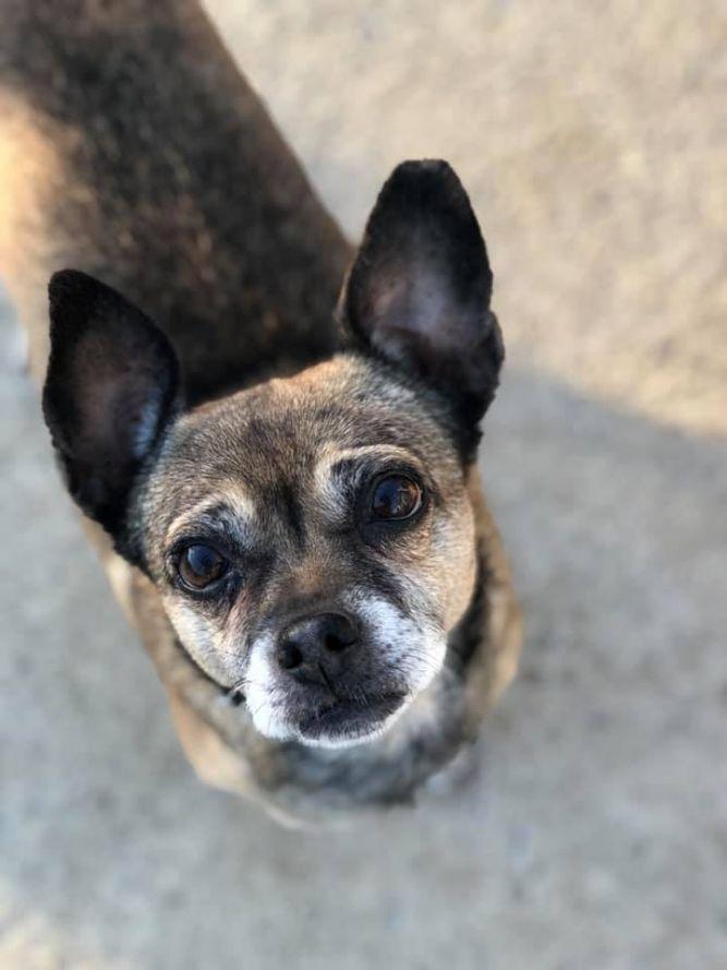 Pin On Adopt A Dog