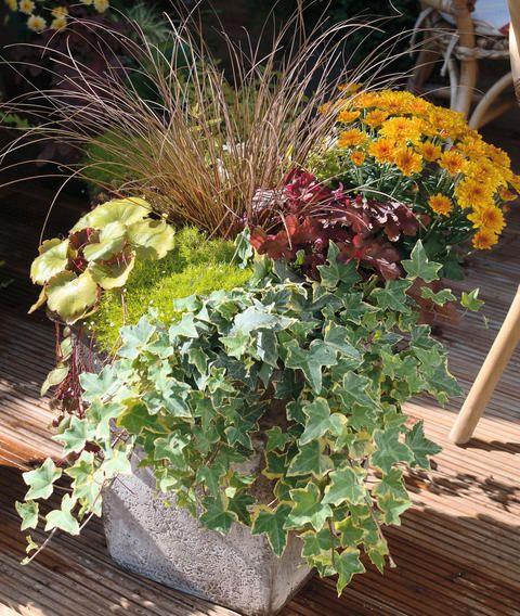 Herbstbepflanzung für Töpfe und Kübel Herbst Herbstbepflanzung, Balkon beet und  ~ 01213229_Sukkulenten Balkon Winterhart