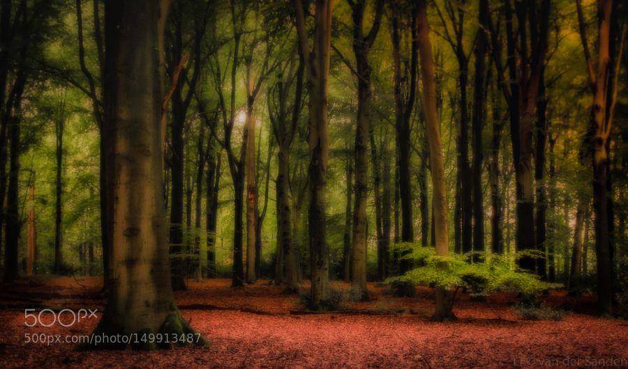 Dark woods by Leo_van_der_Sanden #nature #mothernature #travel #traveling #vacation #visiting #trip #holiday #tourism #tourist #photooftheday #amazing #picoftheday