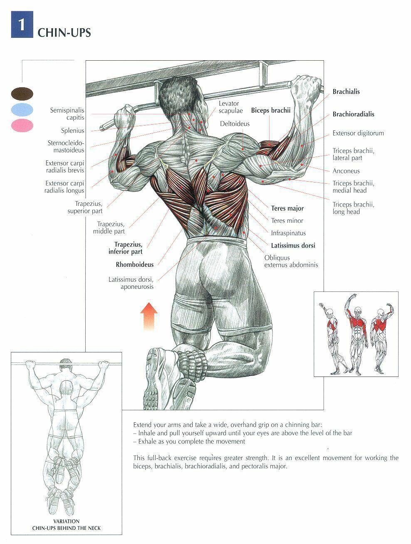 Fytnezz! | Anatomia | Pinterest | Ejercicios, Anatomía y Entrenamiento