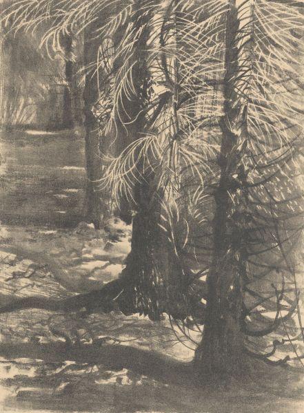 Świerki w Gościeradzu - Leon Wyczółkowski