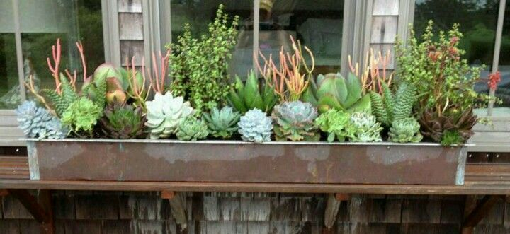 Succulent Window Box Looks Like A Coral Reef Succulent Planters Box Succulent Landscaping Succulent Landscape Design