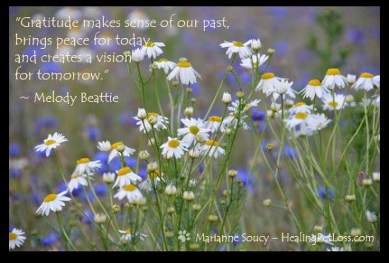 Healing Pet Loss - Marianne Soucy - Gratitude quote