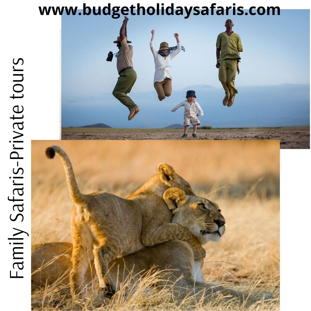 Our group tour and private safari tours depart everyday from Nairobi,Kenya. See our website to choose a safari that you like:   #touroperators #safari #budgettravel #affordableluxury #budgetsafari #economicsafari #eastafrica #budgetholidaysafaris #budgetholiday