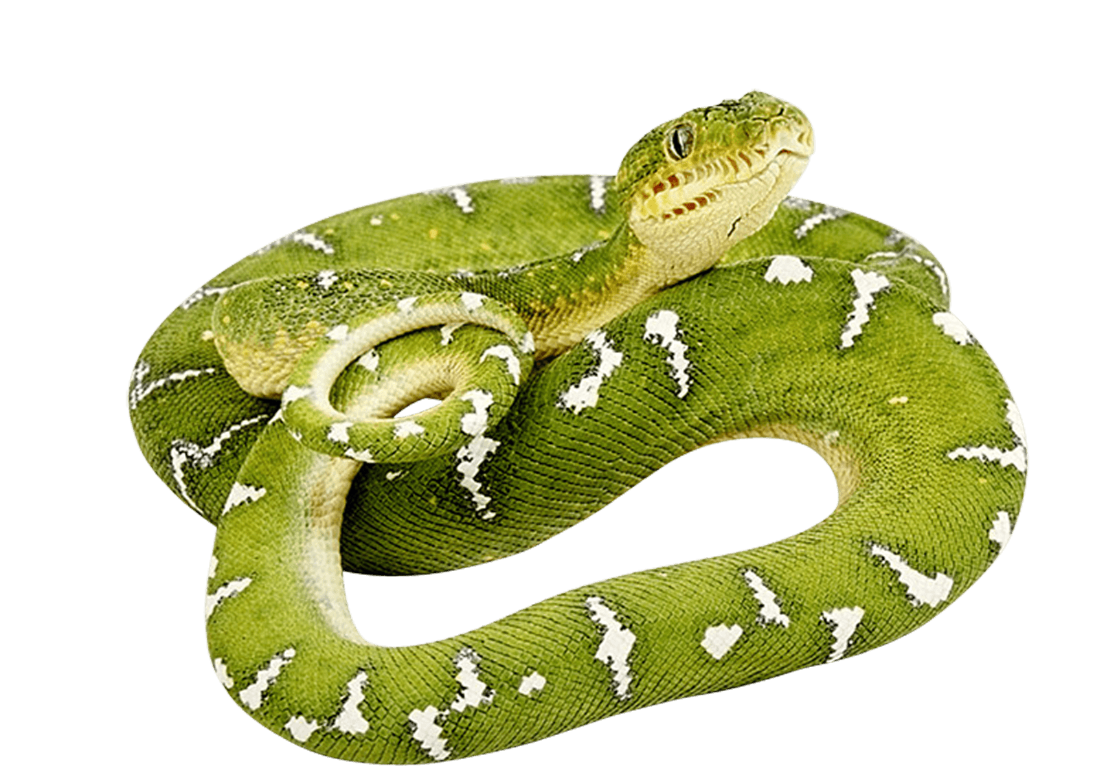 Green Snake Twirling Png Image Snake Clothes Green Animals Green Snake
