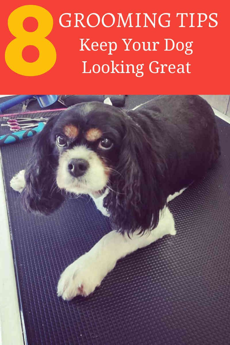The Idea Of Having Your Own Professional Dog Grooming Shear And