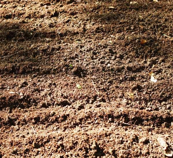 How to Prep your Soil for Planting Garden soil, Garden