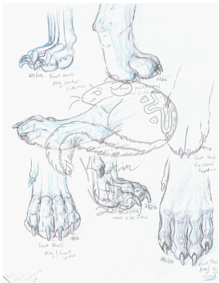 drawings of labrador paws - Google Search | ხატვის ...