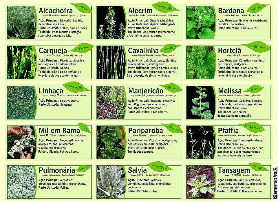 Plantas E Seus Beneficios Com Imagens Ervas Medicinais Ervas