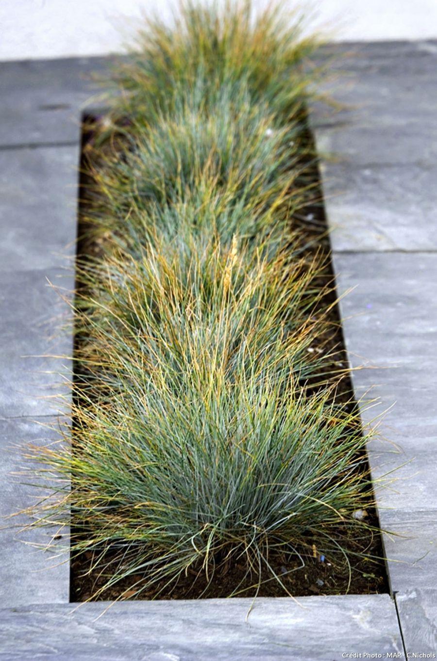 Les gramin es 5 superbes vari t s green gardens - Jardin de graminees photos ...