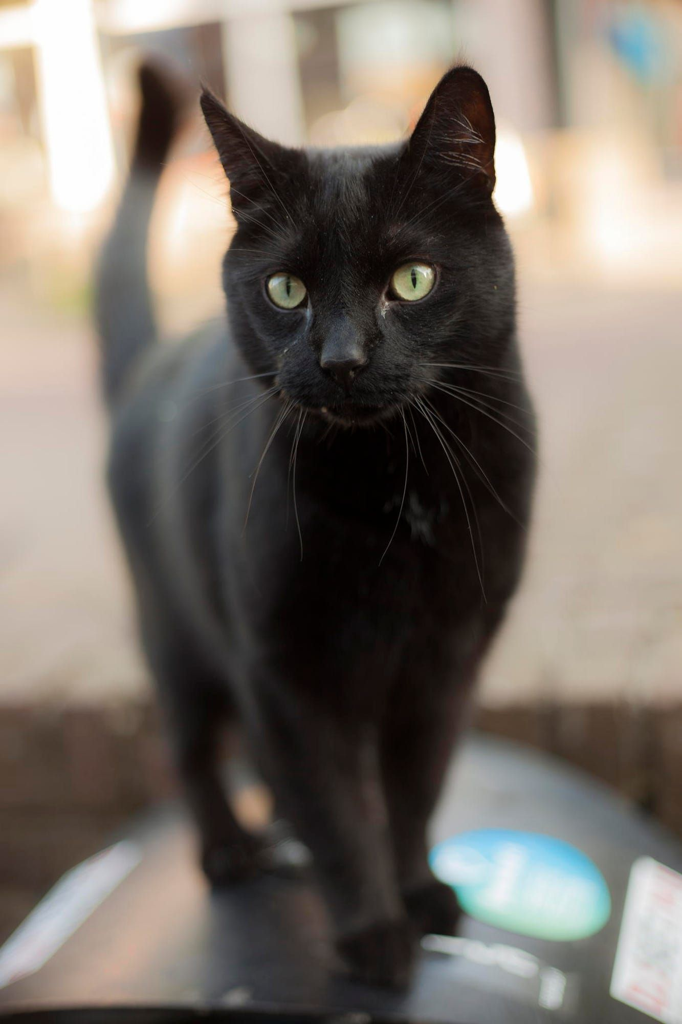 So Handsome Looks Like My Casper Animal Photography Pinterest - Meet scrappy 19 year old black cat grew unique marble fur due rare skin condition
