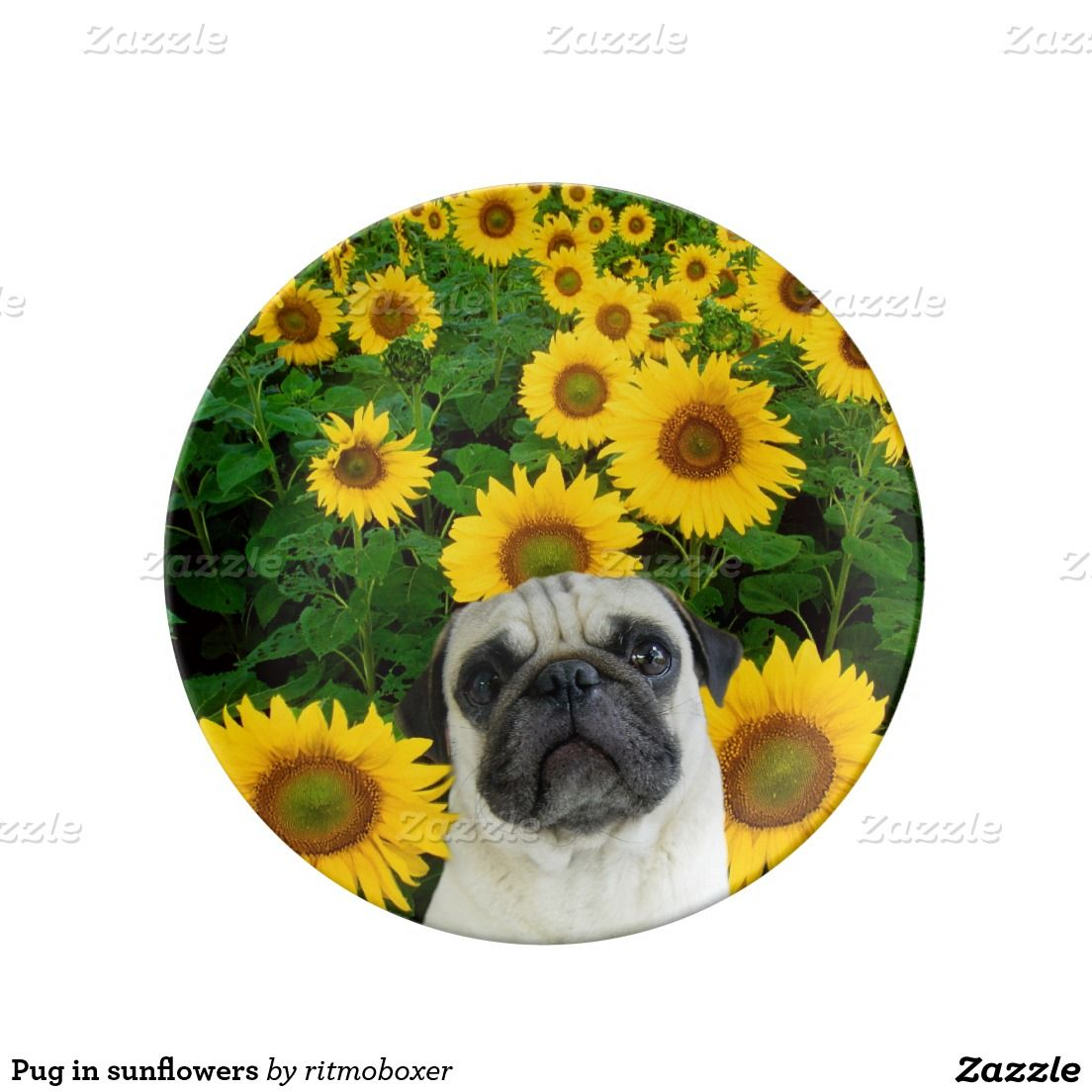 Pug In Sunflowers Dinner Plate Zazzle Com Hanging Microwave Pugs Porcelain Plates