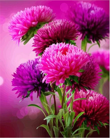 Hot Pink Aster Flowers Flowers Paint By Number Numeral Paint Modern Wall Art Canvas Wall Art Canvas Painting Flower Painting