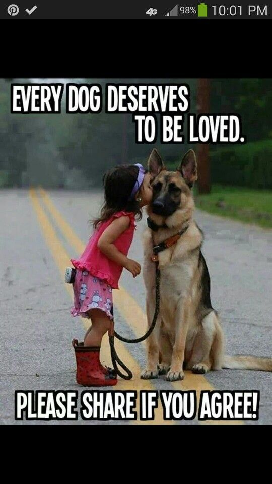 Kids and dogs go together like peas in a pod one doesn't negate the other