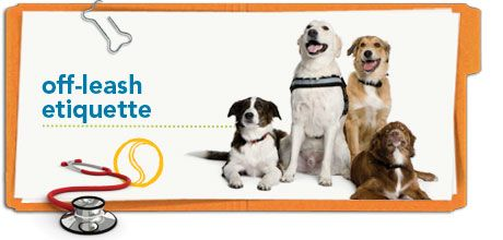 To make your trip to the dog park safe and successful for all, check out this pet health tip from Petplan pet insurance!