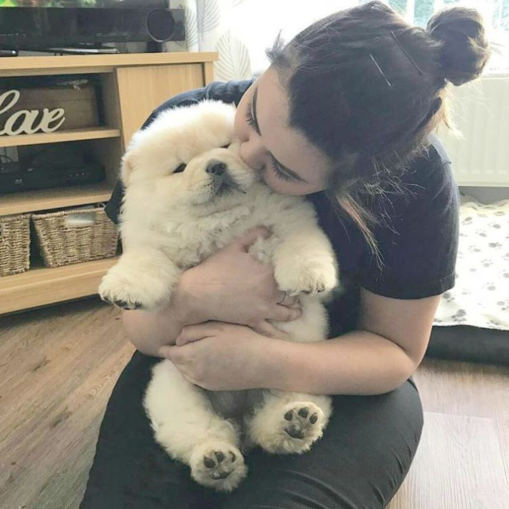 Dog Breeders Puppies For Sale Nsw Any Dog Breed Puppies Best Not