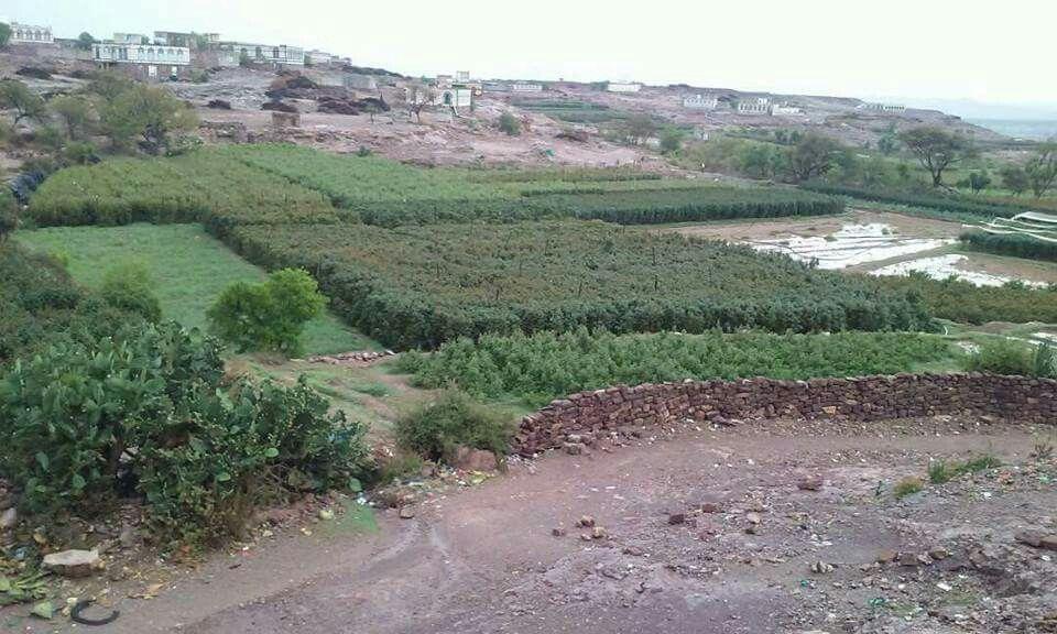 قرية القدام مريس الضالع اليمن Yemen Farmland Vineyard Outdoor