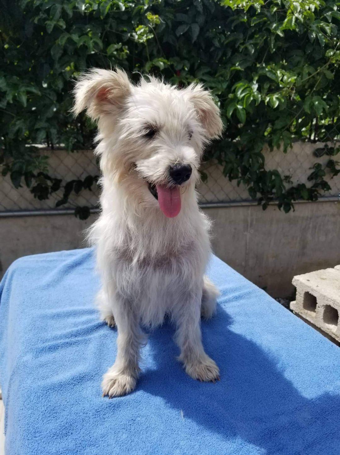 Adopt Lara On In 2020 Second Chance Animal Rescue Dog Adoption Animal Rescue