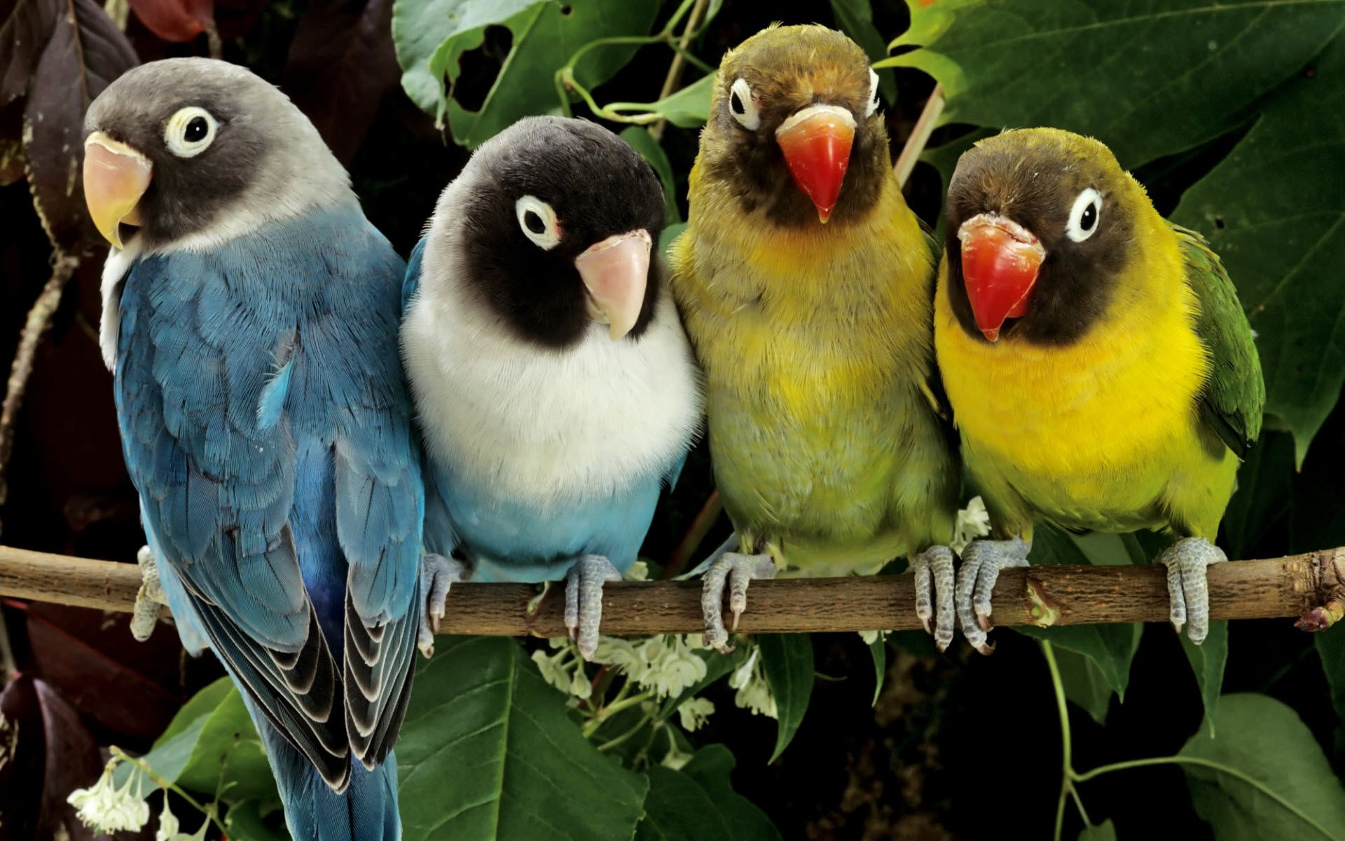 Animals HD Desktop Wallpapers for Widescreen