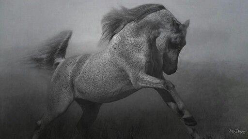 Long May I Reign Horses Horse Wallpaper White Horses Black and white horse wallpaper hd