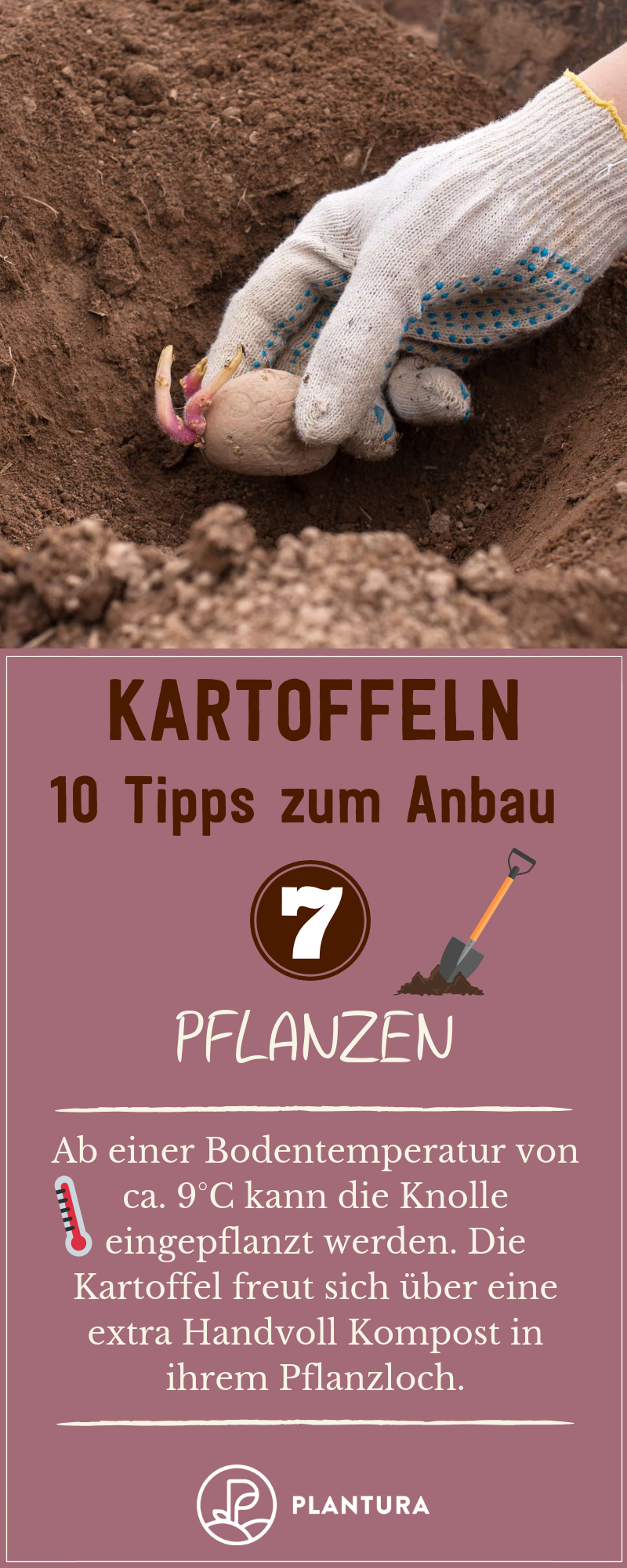10 Tipps für den Kartoffelanbau im eigenen Garten - Plantura