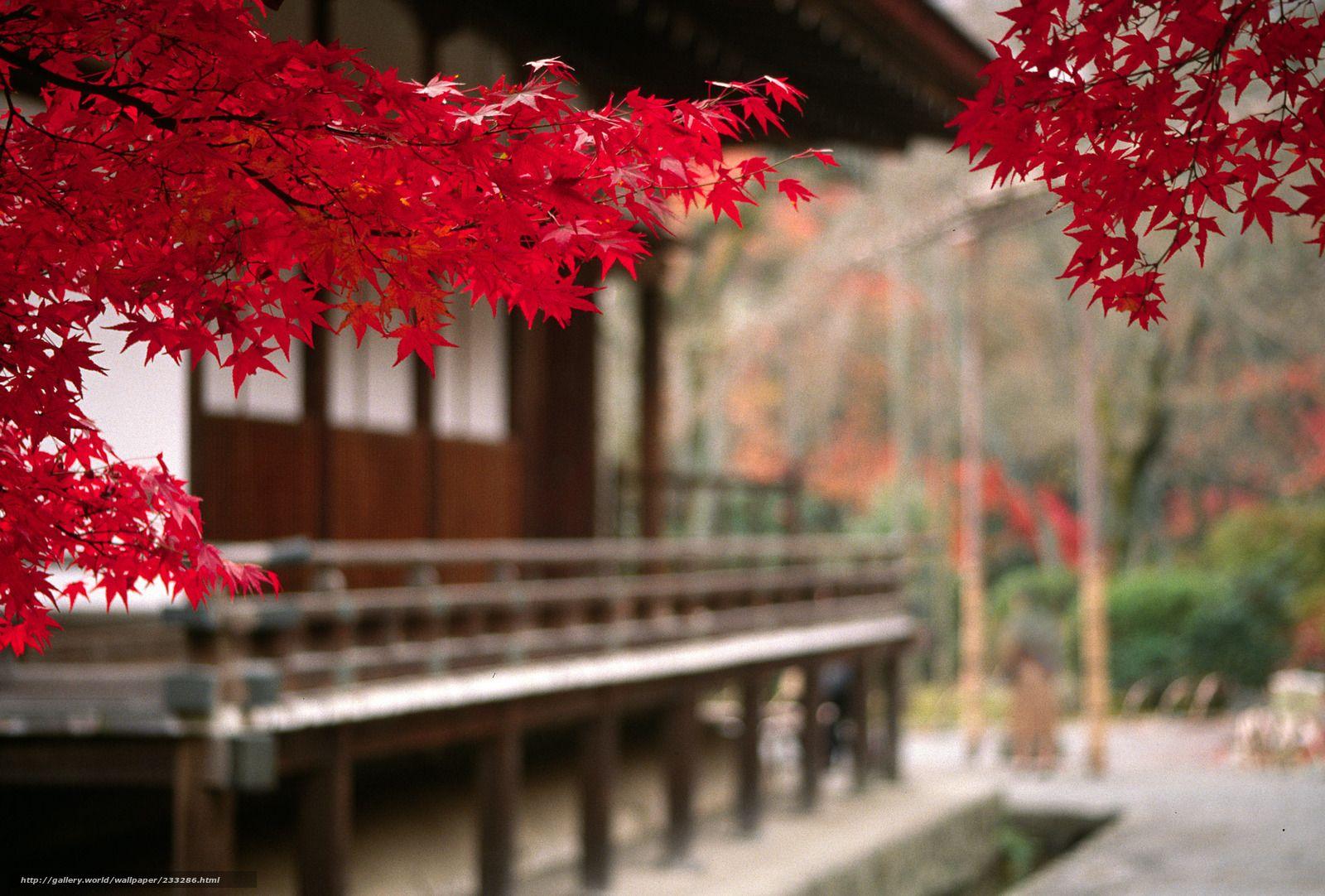 Tlcharger Fond D Ecran Paysage Japon Automne Arbre Fonds D Ecran Gratuits Pour Votre Rsolution Du Bureau Erable Rouge Jardin Japonais Fond Ecran Paysage