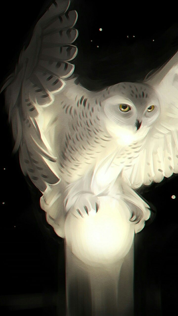 Mystical Snowy Owl Owl Wallpaper Owl Artwork Beautiful Owl