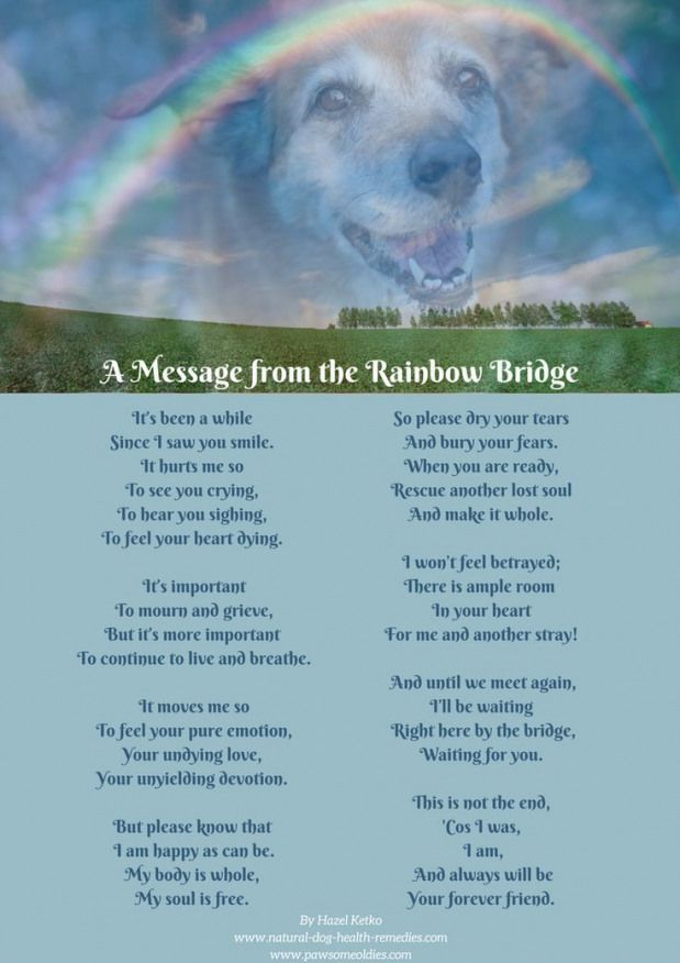 Pet Loss Poems Celebrating The Love And Lives Of Our Dogs