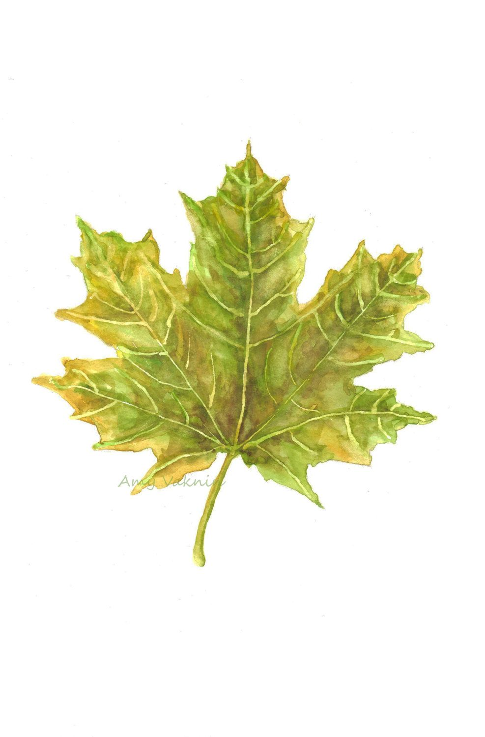 Yellow Green Maple Leaf With Images Leaves Watercolor Trees