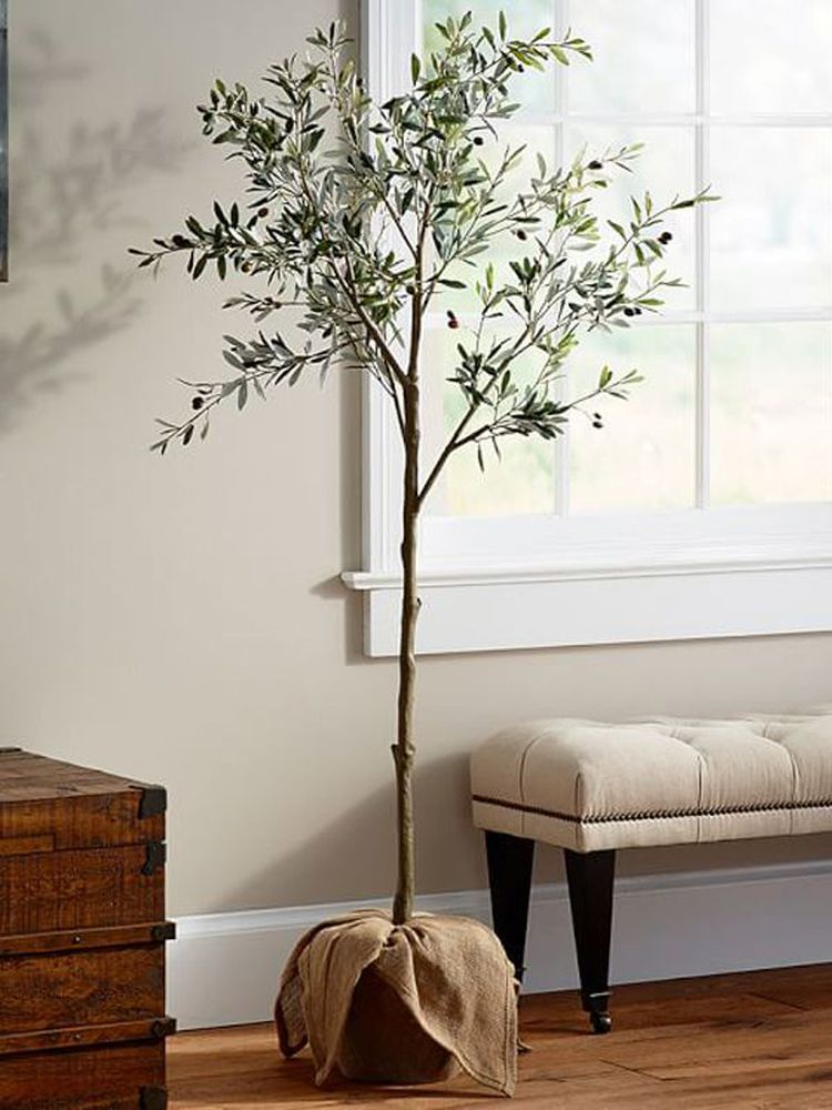 """Indoor Olive Trees Are the Next """"It"""" Plant—Here's How to"""