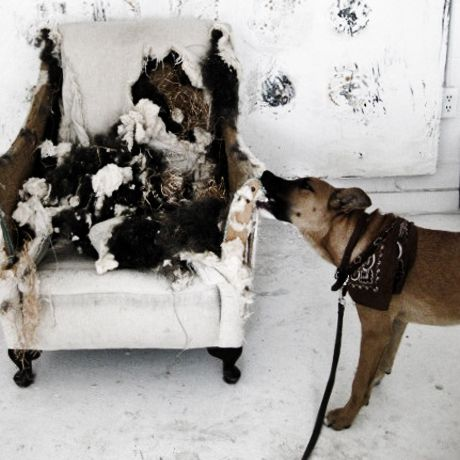 This is so darn funny .... as long as it's not your chair. :) Patricia Larsen, photographer