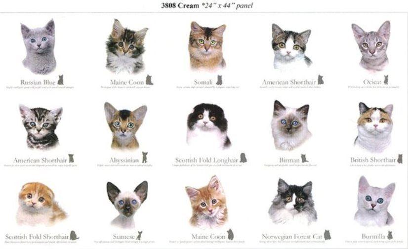 Chart Showing Breeds Of Cats Cat Breeds Cat Breeds Chart Cat Breeds List