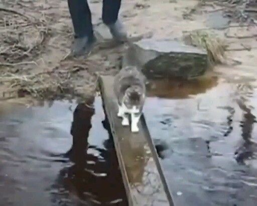 Ok. I'll go but I'm not getting my feet wet #funnyvideos
