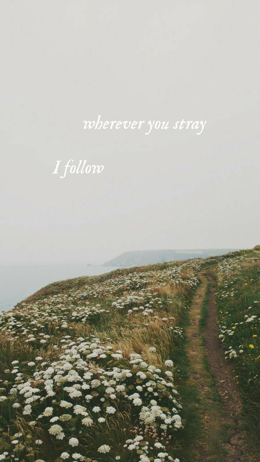 Evermore Wallpaper Background Willow Taylor Swift Lyrics Taylor Swift Quotes Taylor Lyrics