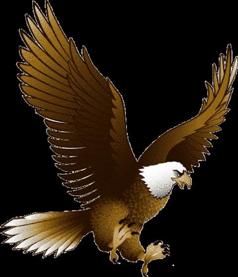 Download Eagle Png Images Background Png Free Png Images Eagle Images Eagle Pictures Eagle Drawing
