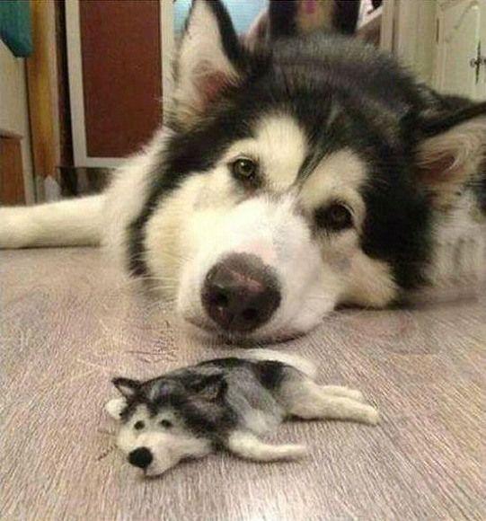 ハスキー犬の毛で作られた人形がハスキー犬すぎる