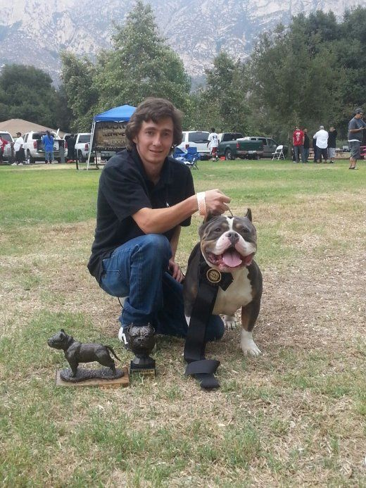 Grand Champion Beastro Wins 42 In San Diego The Bully Market